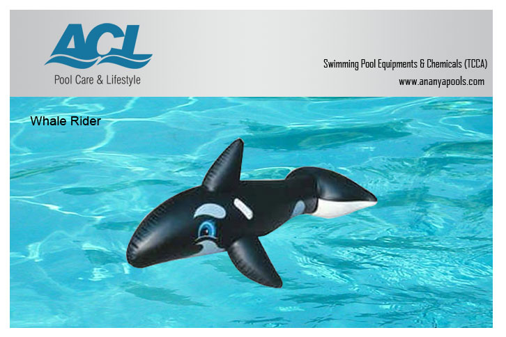 Whale Rider At Best Prices Shopclues Online Shopping Store