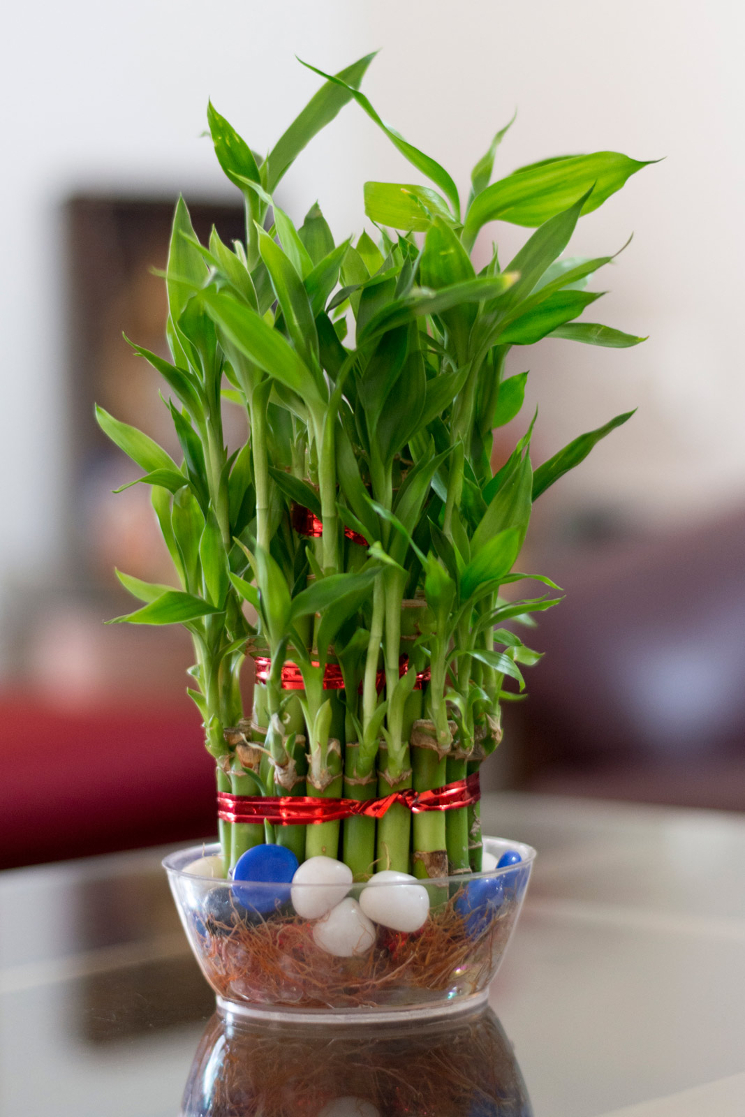 While not actually bamboo this dracaena is sure to bring luck to your dorm. Simplistic and easy to grow in low-light conditions having a lucky bamboo is a ... & Top 8 Plants To Brighten Your Dorm