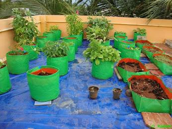 10 no 39 s hdpe grow bags 9 39 39 w 9 39 39 h terrace kitchen garden for Terrace kitchen garden india