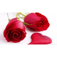 Beautiful Red Rose Seeds 10 Seeds Red Rose Flower Seeds