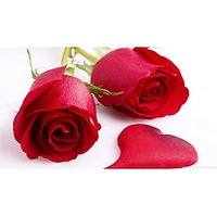 Beautiful Red Rose Seeds 5 Seeds Red Rose Flower Seeds