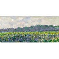 Field Of Yellow Irises By Monet - Fine Art Print