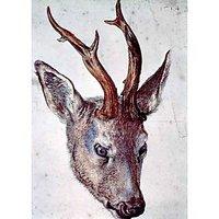 Head Of A Deer By Durer - Fine Art Print