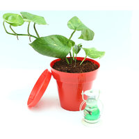Money Plant In Red Colorista Pot With Scented Candle Lantern