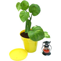 Money Plant In Yellow Colorista Pot With Scented Candle Lantern