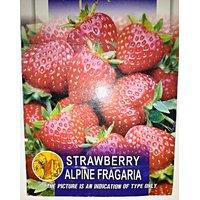 Strawberry Seeds 10 Pc Free Shipping