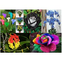 Rare Orchid And Beautiful Flowers Seeds Combo Of 5 Different Types INDOOR Plants