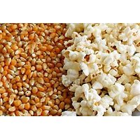 Dried Corn Kernels For Making Pop Corn! BEST Quality Indian PopCorn