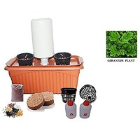 GZ Green Aeroponic Geranium Twin Plant (fragrance) Kit With Water Drip Controller ( Easy To Grow )