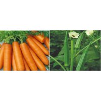 Hybrid Seeds Combo Pack Carrot And Lady Finger Seeds (Pack Of 50 Seeds)