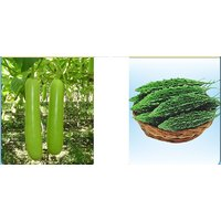 Hybrid Seeds Combo Pack Hybrid Bottlegourd And Bittergourd Combo Pack