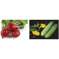 Hybrid Seeds Combo Pack Beetroot Seeds And Cucumber Seeds(pack Of 2 Per Pack 50 Seeds)