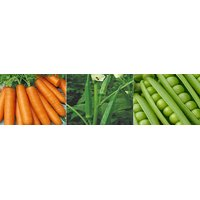 Hybrid Seeds Combo Pack Carrot, Lady Finger And Peas Seeds (Pack Of 2 ) - 93538223