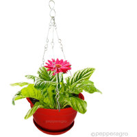 HANGING PLANTER FLOWER POT WITH METAL CHAIN WITH BASE 8.5 INCH 2QTY