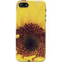 DailyObjects Sunflower Close Up Case For IPhone 5/5S
