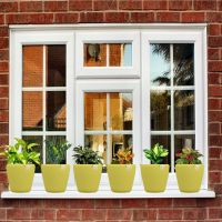 Pack Of 6 Stoic (Yellow Planters)