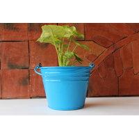 Green Gardenia Bucket With Handle Small