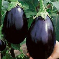 Brinjal Black Beauty Seeds Pack Of 30