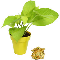 Golden Pothos In Yellow Colorista Pot With Laughing Buddha Combo