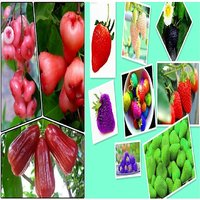 Pack Of 10 Rose Water Apple Seeds+20 Rainbow Color Mix Giant Strawberry Seeds