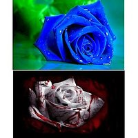 Pack Of 20 Rare Seeds ( 10 Blue Dragon Rose Seeds + 10 White Bloody Rose Seeds)