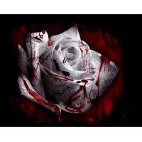 Pack Of 10 White Blood Rose Seeds(Bleeding Rose), Growing Instruction Sheet Free