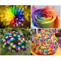 Pack Of 20 Rainbow Rose Seeds(10 Rainbow Chrysanthemum +10 Rainbow Rose) Seed